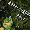 Александрийский лист и его лечебные свойства , применение , противопоказания