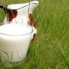 Бруцеллез: когда стакан молока может быть опасным