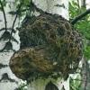 Чага, березовый гриб - описание, полезные свойства, применение