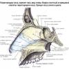 Искривление носовой перегородки: симптомы и лечение