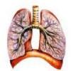 Экссудативный плеврит - симптомы, лечение