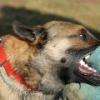 Как лечить укус собаки?