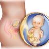 Как рассчитать благоприятные дни для зачатия?