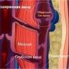 Компрессионное белье при варикозном дерматите
