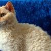 Кошки восстанавливают иммунодефицит у человека!