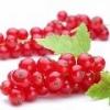 Красная смородина: свойства и польза красной смородины