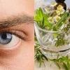 Лечение глаукомы травами