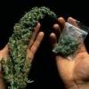 Медики пришли к выводу: зависимость от марихуаны не лечится