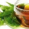 Настойка крапивы: применение и лечение