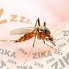 Новые данные: вирус зика приводит к параличу