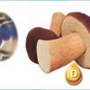 Облучённые грибы – ценный источник витамина d!