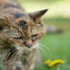 Особенности и методы лечения злокачественной опухоли у кошек