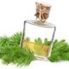 Пихтовое масло: применение, лечебные свойства