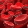 Повышение количества лейкоцитов в крови: лейкоцитоз