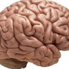Рискованный человек имеет совсем другую активность мозга!