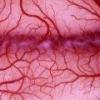 Сосудорасширяющие препараты – средства для улучшения кровообращения