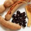 Тамаринд (выращивание) - описание, полезные свойства, применение