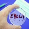 Ученым удалось разработать эффективную вакцину от эболы
