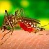 Вакцина против малярии поможет защитится от заболевания раком