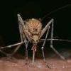Вирус зика скоро окажется в европе