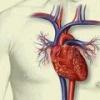 Восстановление тканей сердца после инфаркта миокарда